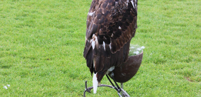Krása letu dravých vtákov